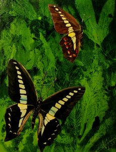 "Papilio Graphica Butterfly (20"" x 22"")"