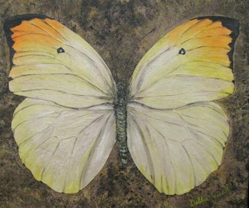 "Antoes Menippie Butterfly (30"" x 36"")"